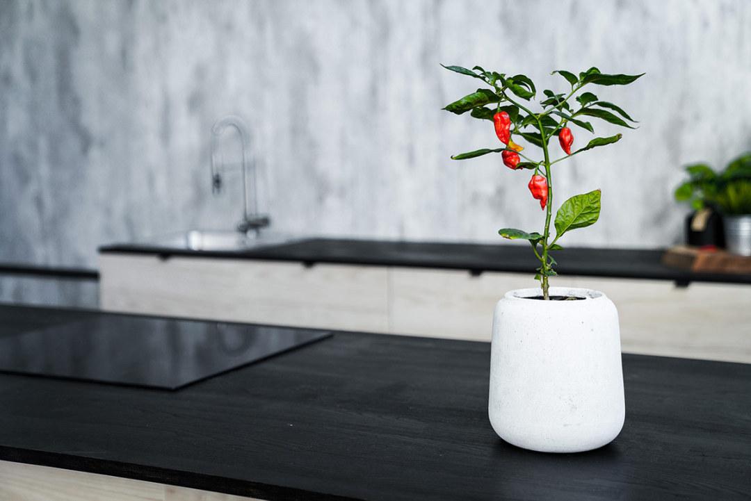 Big South Malmö studiokök för matfotografering chiliplanta i kruka från House Doctor