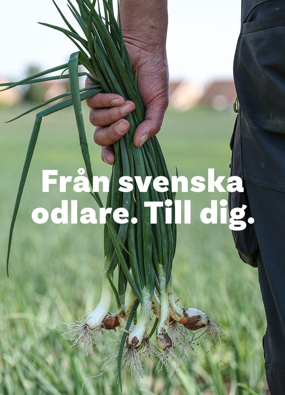 Från svenska odlare. Till dig. En odlare håller i ett lök knippe