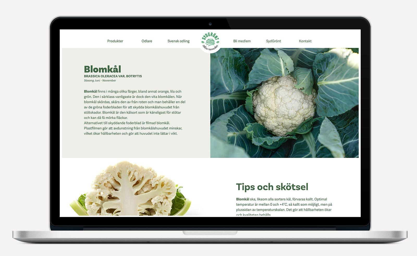 SydGrönt produktsida om blomkål i ny webbdesign